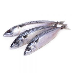 Ikan Mabong (mackerel)