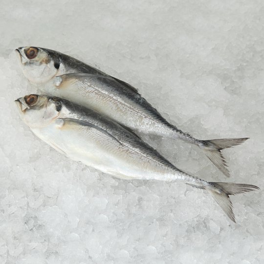Ikan Cencaru